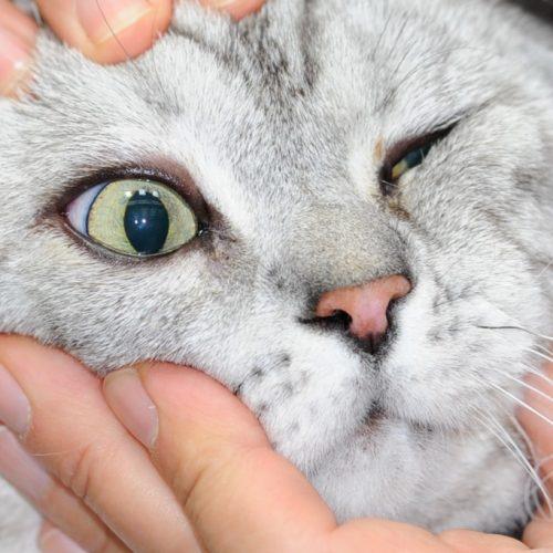 Untersuchung Katze