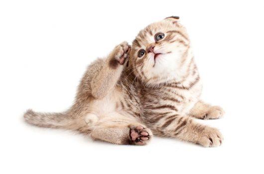 Katze welche sich kratzt