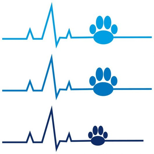 EKG mit Hundepfote