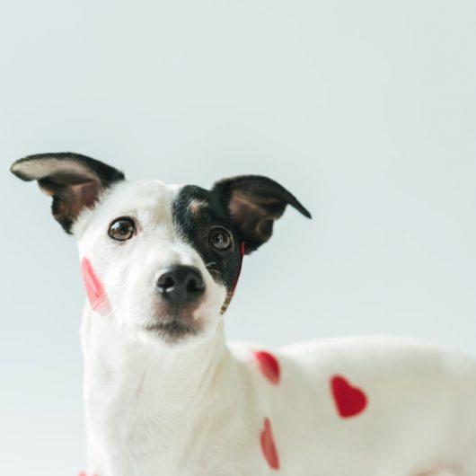 Hund mit roten Herzen